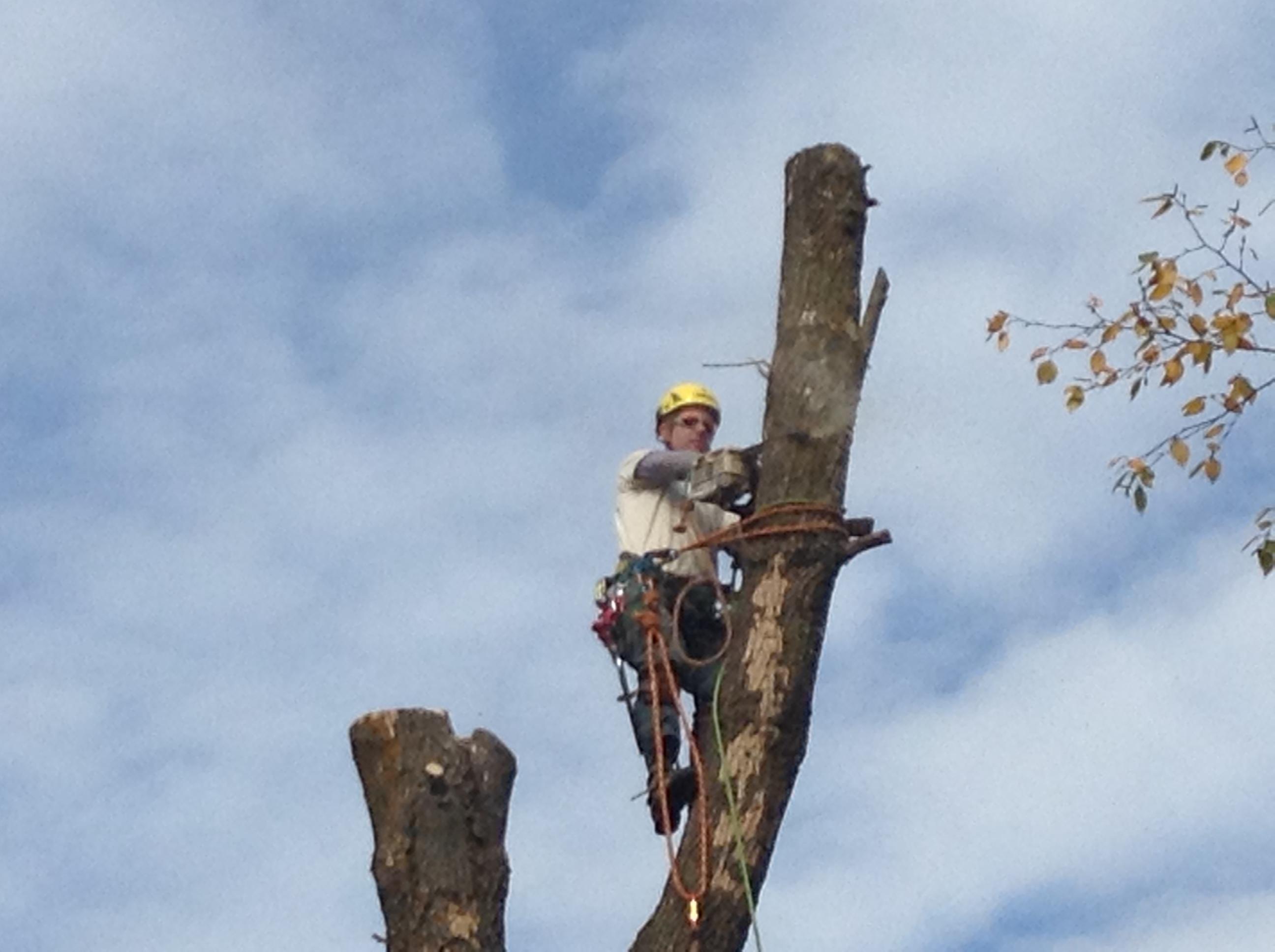 Arborist, Tree Service - Img 0406