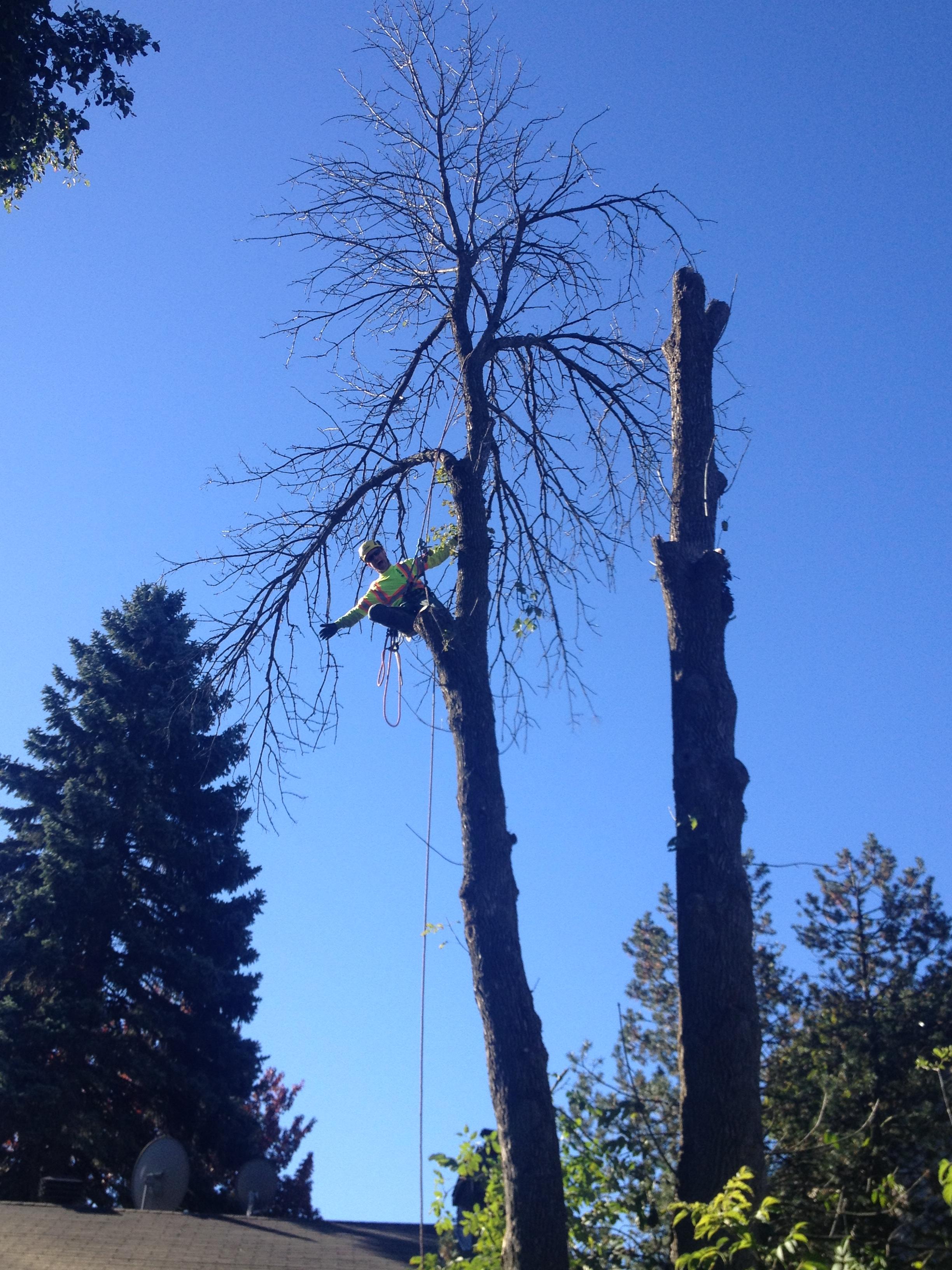 Arborist, Tree Service - Img 4993