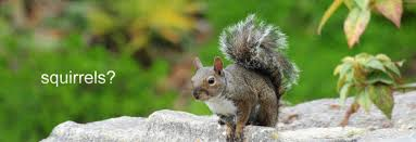 Looking For Squirrel Removal In Toronto? - Index