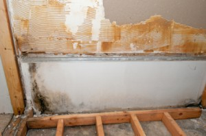 Water Damage Professionals - Flooded Basement Toronto